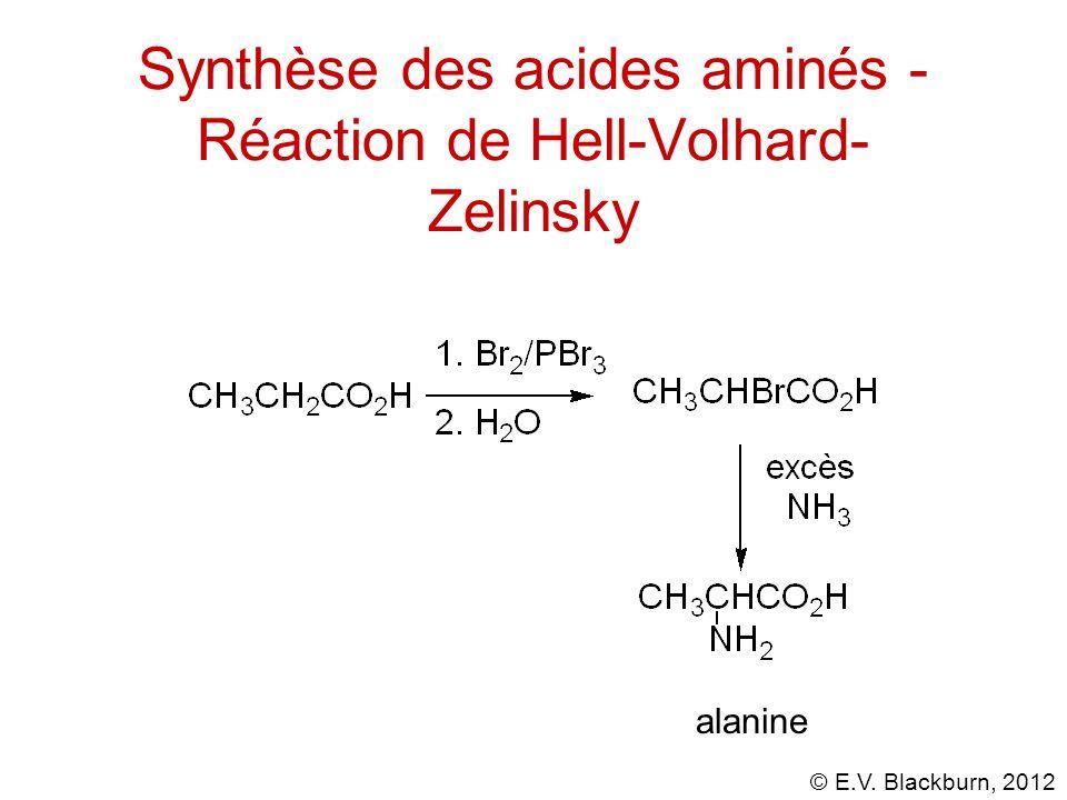 Synthèse des acides aminés - Réaction de Hell-Volhard-Zelinsky