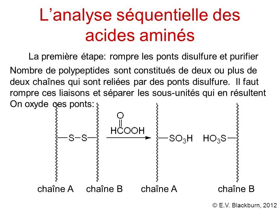 L'analyse séquentielle des acides aminés