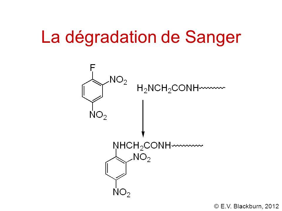 La dégradation de Sanger
