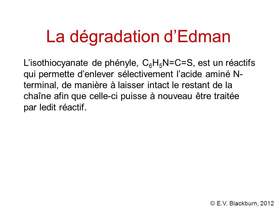 La dégradation d'Edman