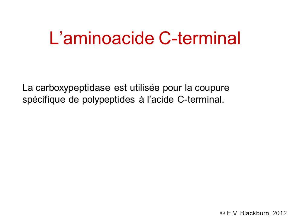 L'aminoacide C-terminal