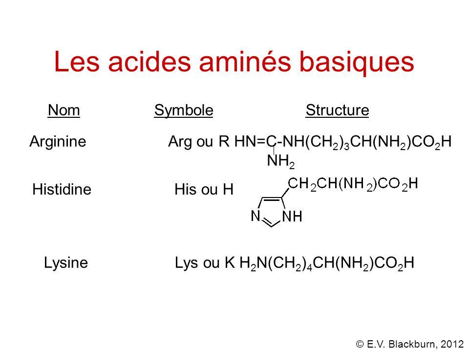 Les acides aminés basiques