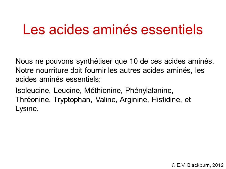 Les acides aminés essentiels