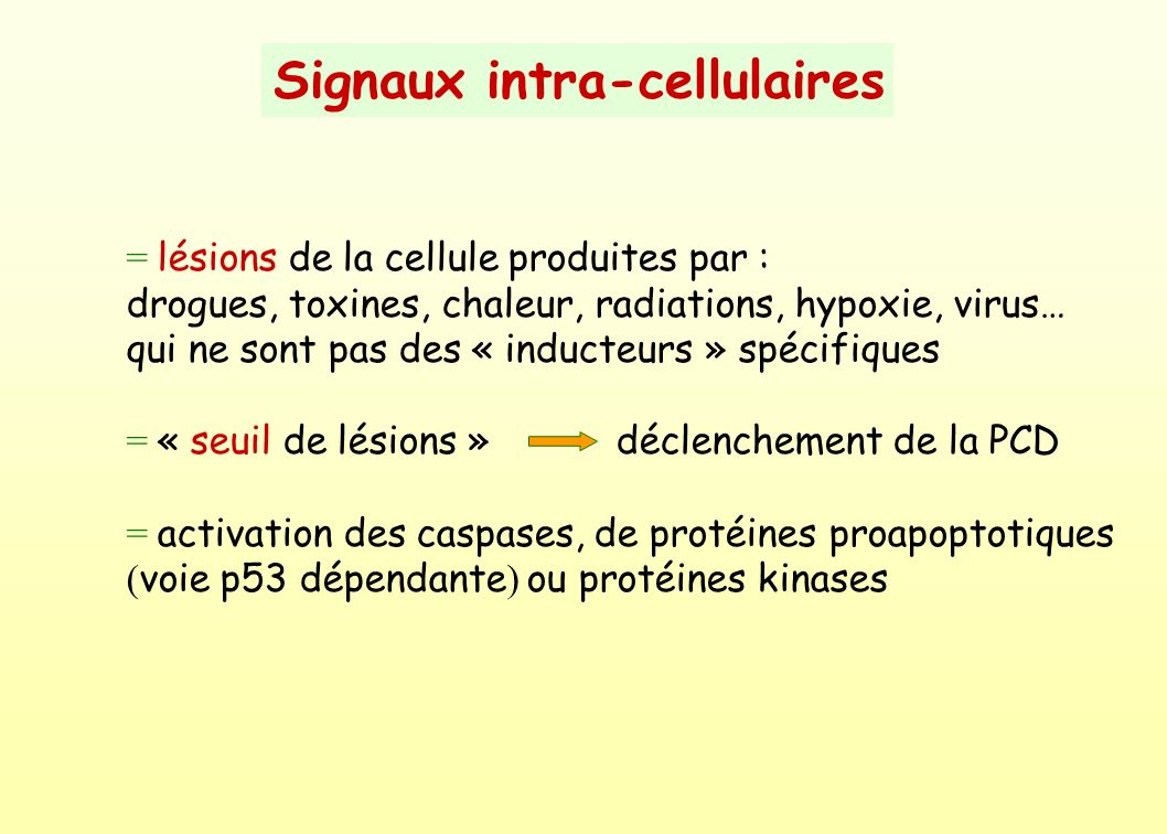 Signaux intra-cellulaires