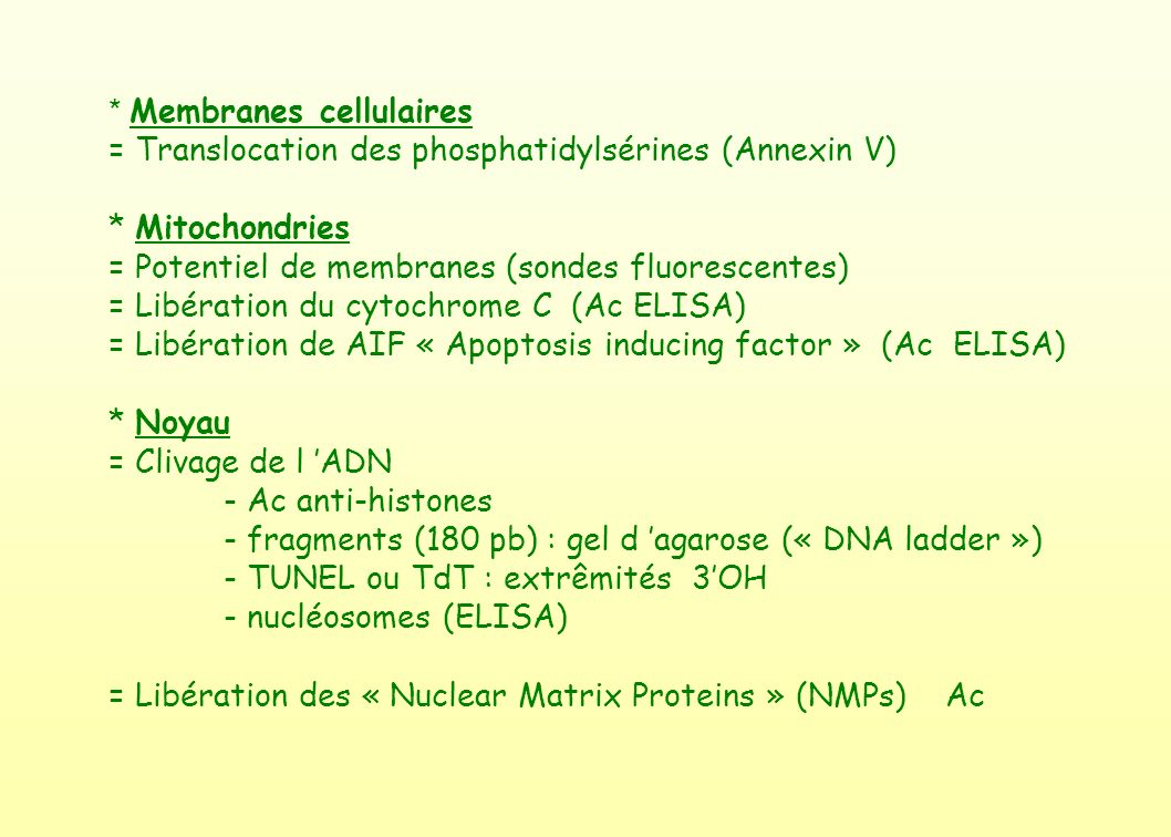 * Membranes cellulaires