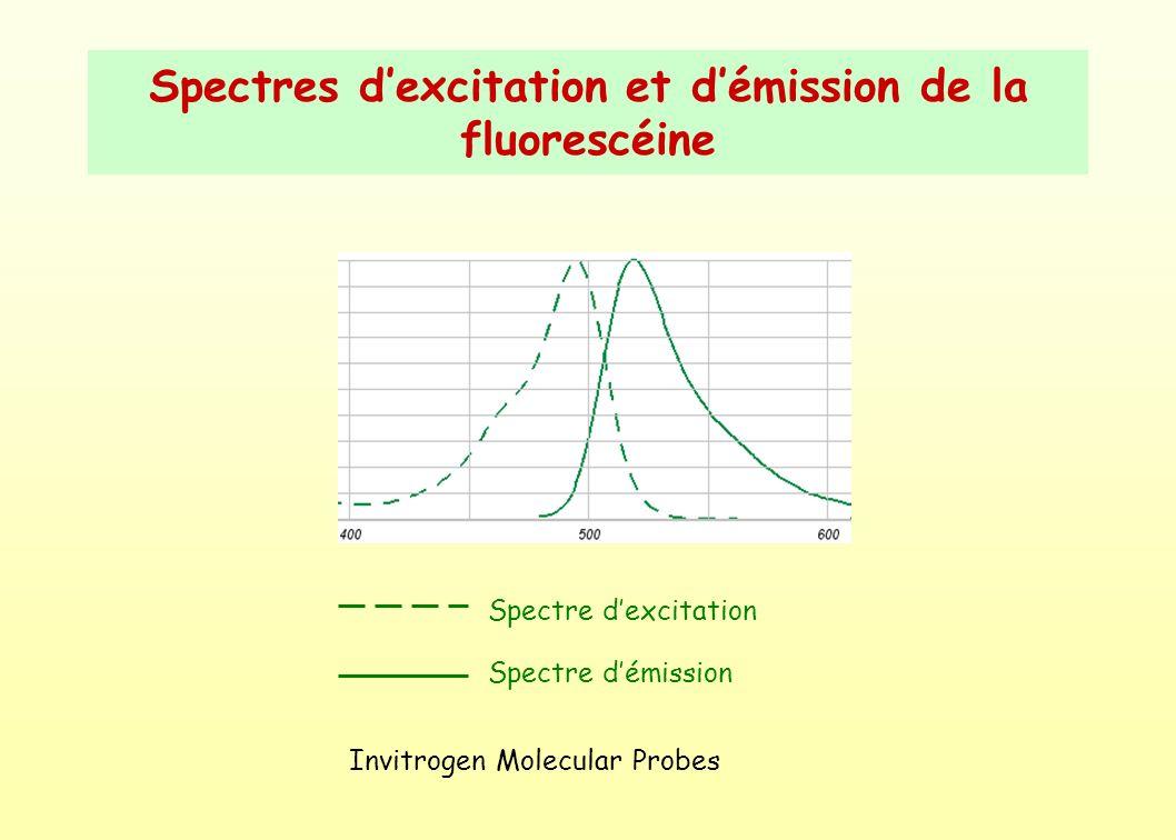 Spectres d'excitation et d'émission de la fluorescéine