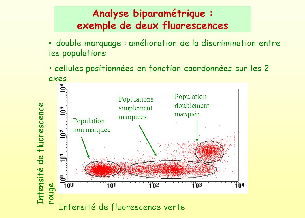 Analyse biparamétrique : exemple de deux fluorescences
