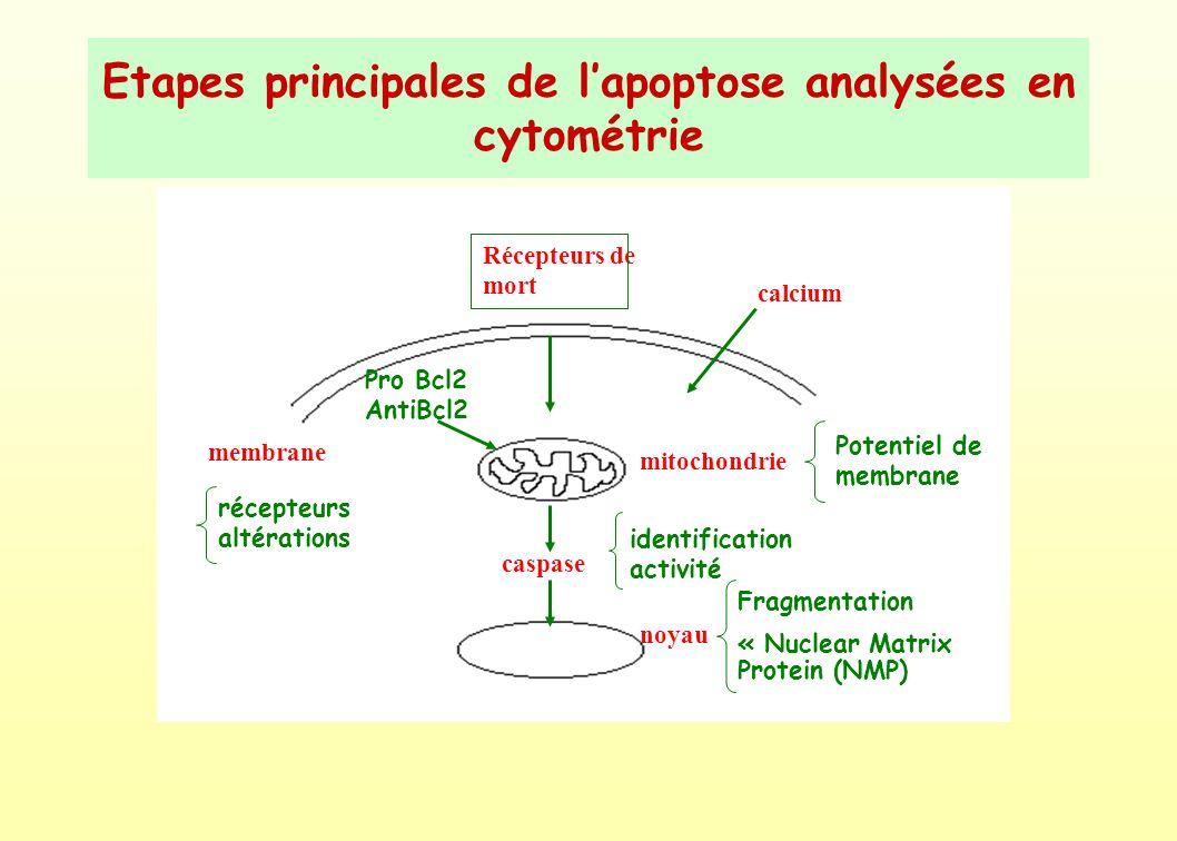 Etapes principales de l'apoptose analysées en cytométrie