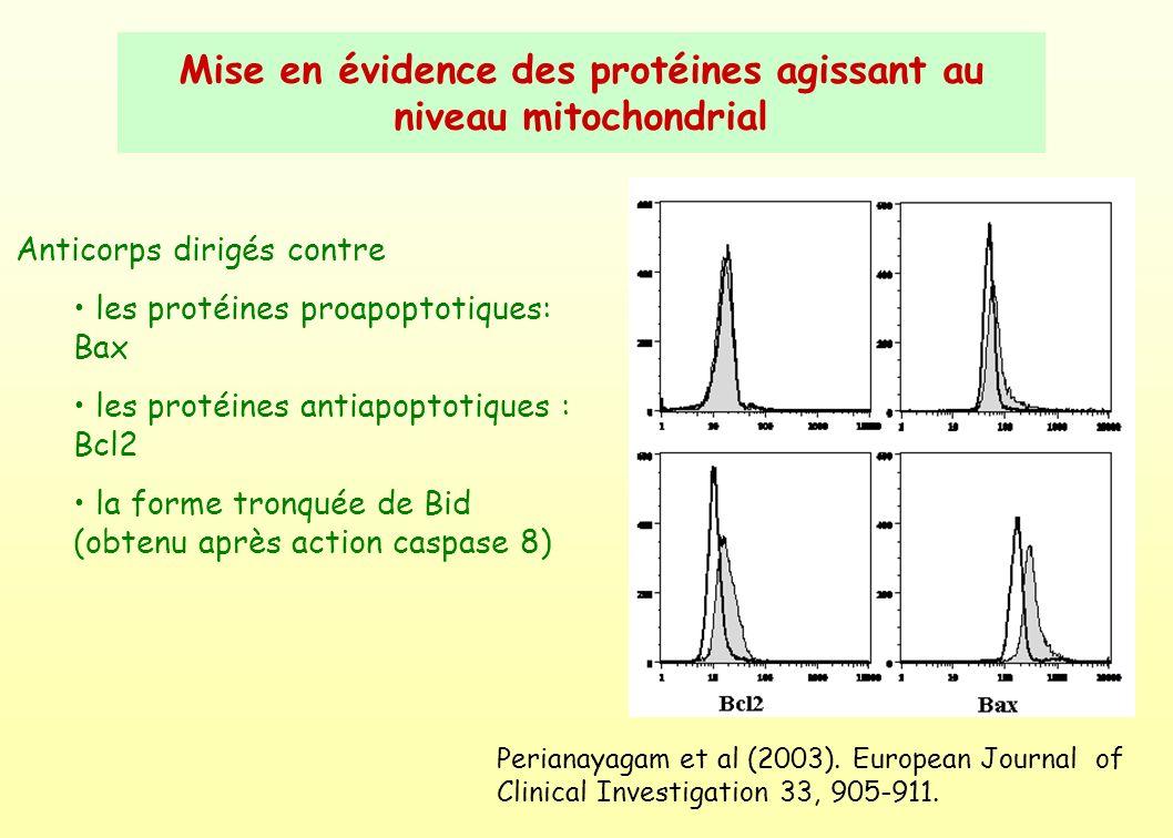 Mise en évidence des protéines agissant au niveau mitochondrial
