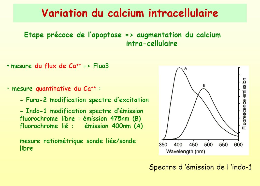 Variation du calcium intracellulaire