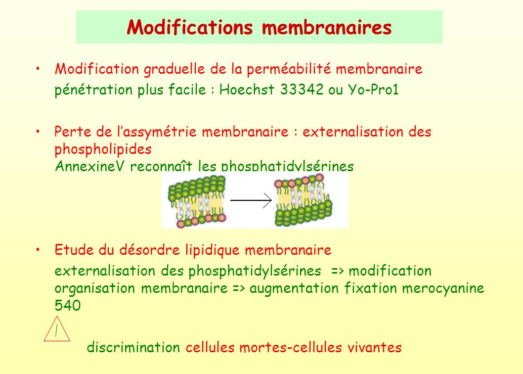 Modifications membranaires