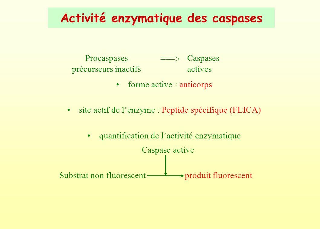 Activité enzymatique des caspases
