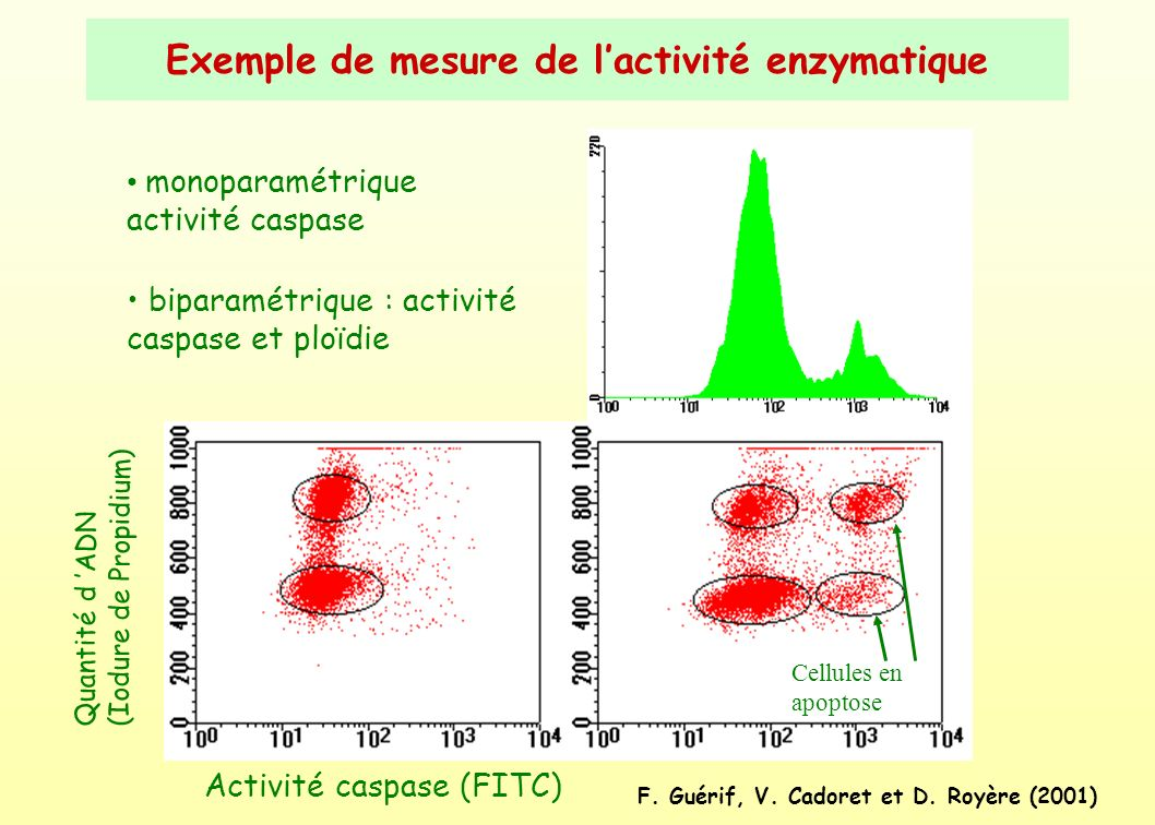Exemple de mesure de l'activité enzymatique