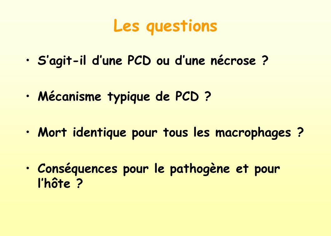 Les questions S'agit-il d'une PCD ou d'une nécrose