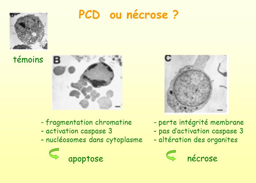 PCD ou nécrose témoins - fragmentation chromatine