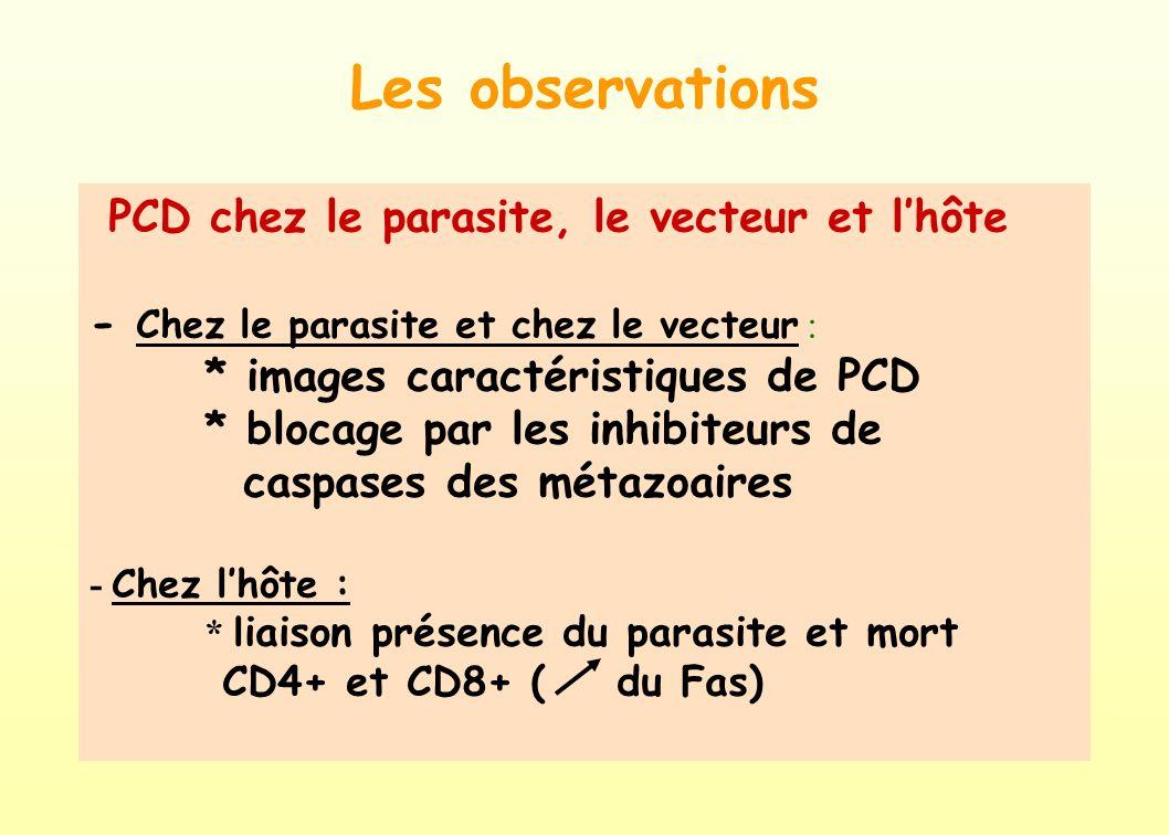 Les observations PCD chez le parasite, le vecteur et l'hôte