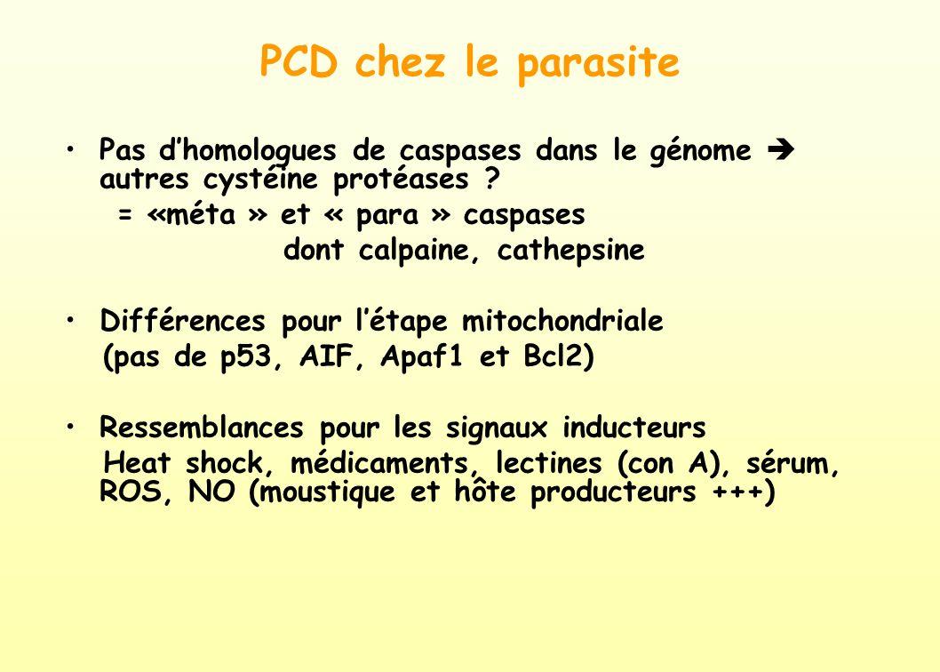 PCD chez le parasite Pas d'homologues de caspases dans le génome  autres cystéine protéases = «méta » et « para » caspases.