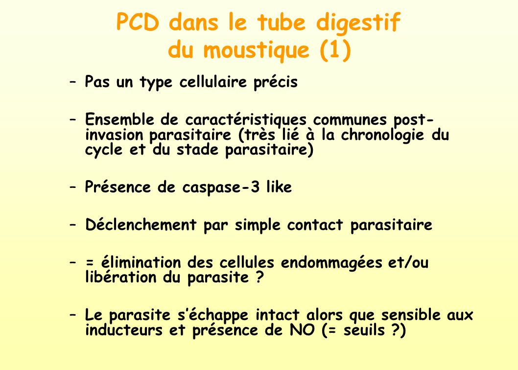 PCD dans le tube digestif du moustique (1)