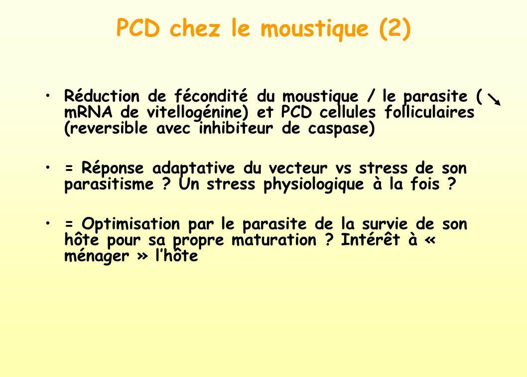 PCD chez le moustique (2)