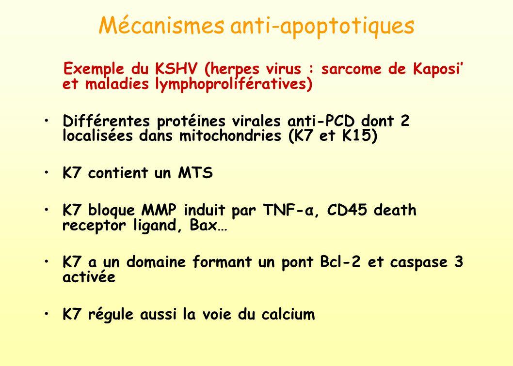 Mécanismes anti-apoptotiques