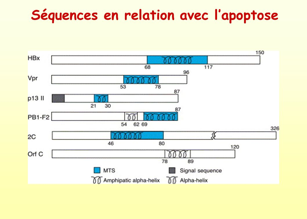 Séquences en relation avec l'apoptose