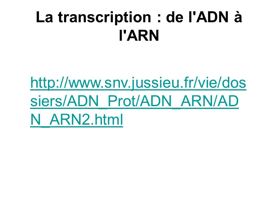 La transcription : de l ADN à l ARN