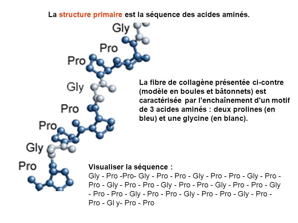 La structure primaire est la séquence des acides aminés.