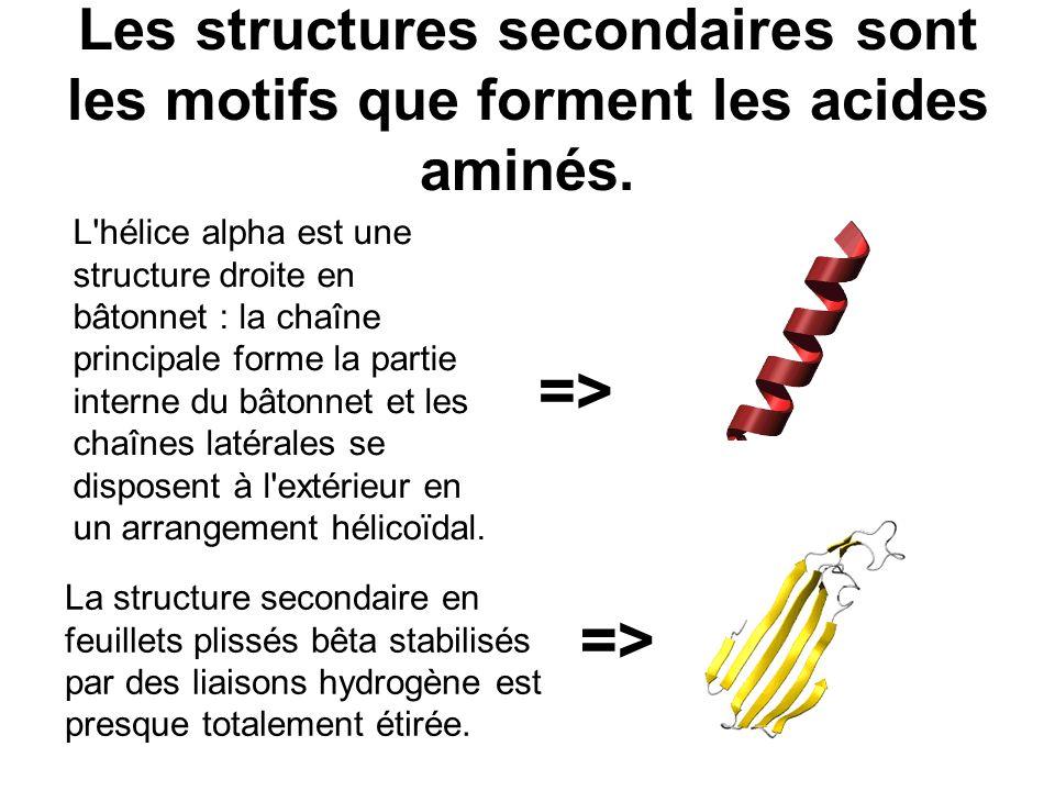 Les structures secondaires sont les motifs que forment les acides aminés.