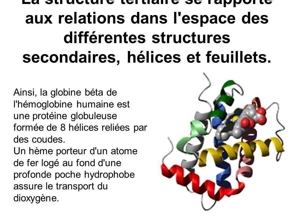 La structure tertiaire se rapporte aux relations dans l espace des différentes structures secondaires, hélices et feuillets.