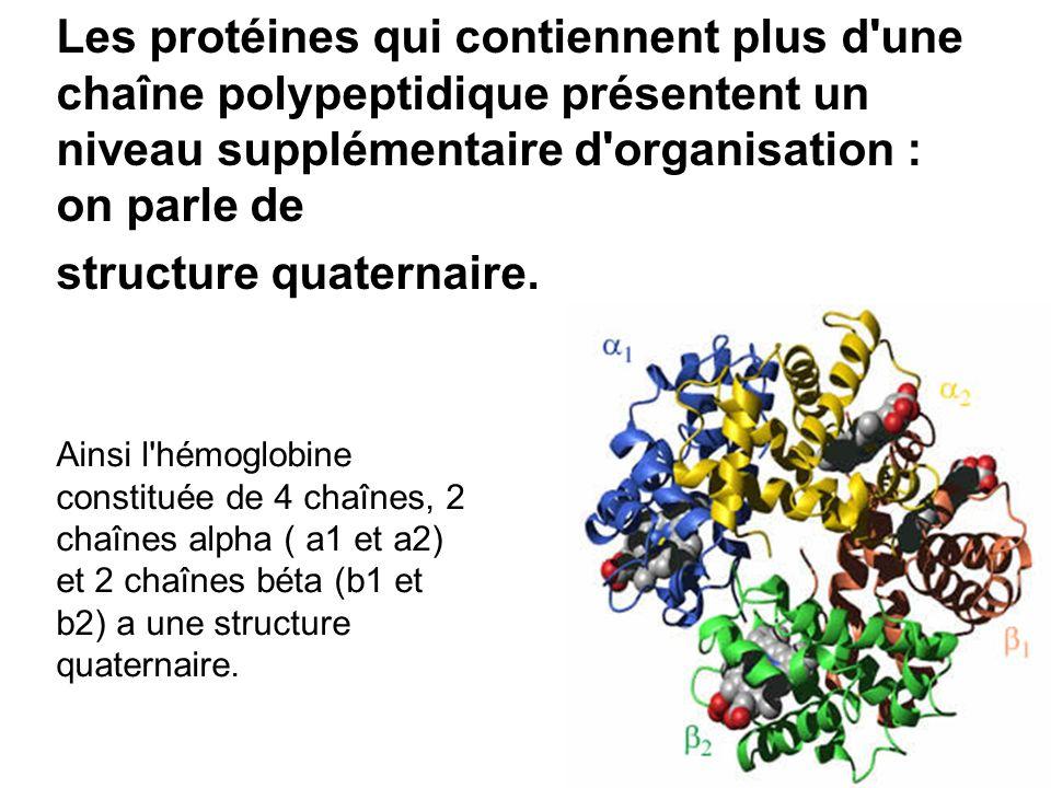Les protéines qui contiennent plus d une chaîne polypeptidique présentent un niveau supplémentaire d organisation : on parle de structure quaternaire.