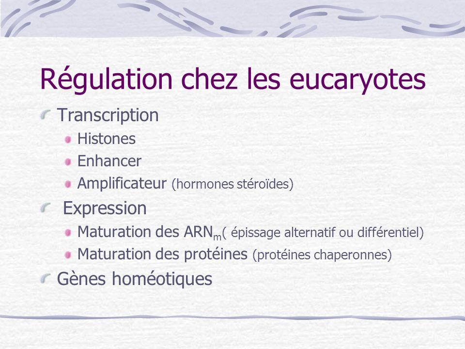 Régulation chez les eucaryotes