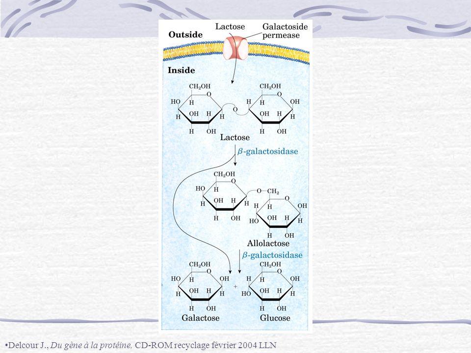 Delcour J., Du gène à la protéine, CD-ROM recyclage février 2004 LLN