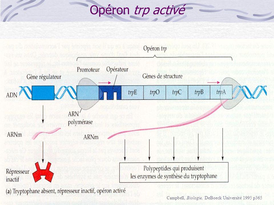Opéron trp activé Campbell, Biologie, DeBoeck Université 1995 p365