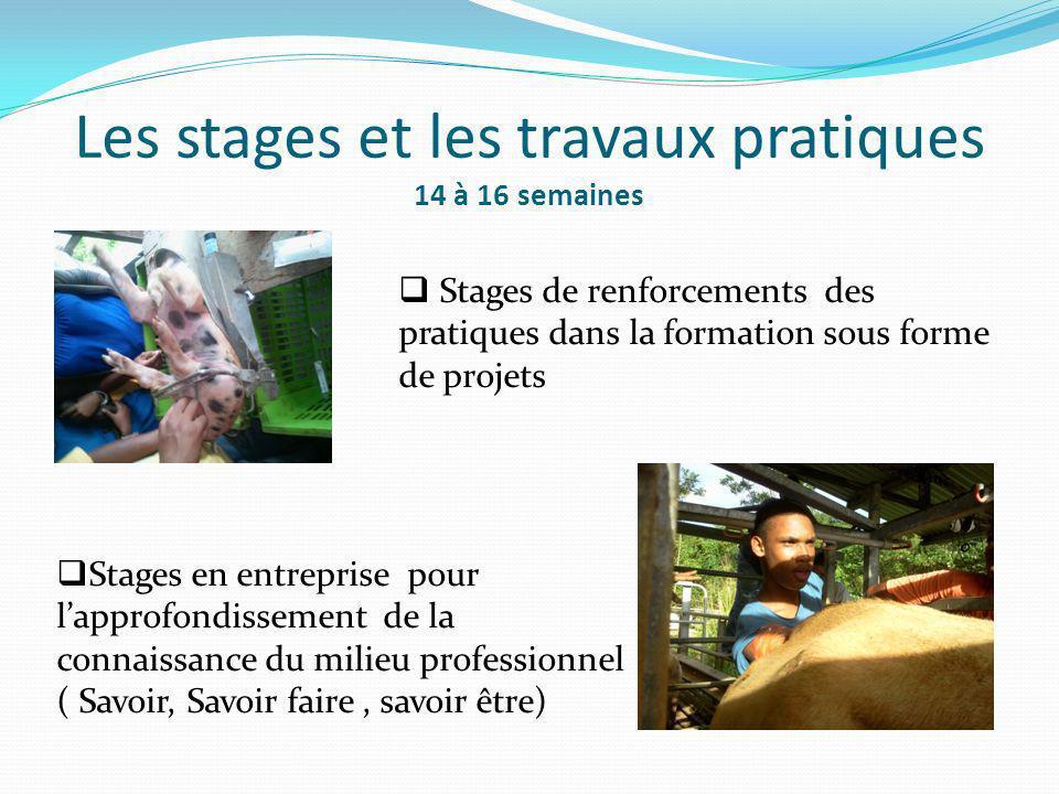 Les stages et les travaux pratiques 14 à 16 semaines