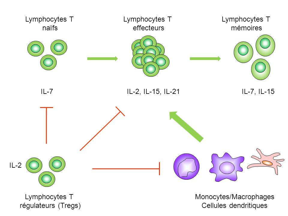 Monocytes/Macrophages Cellules dendritiques IL-2, IL-15, IL-21