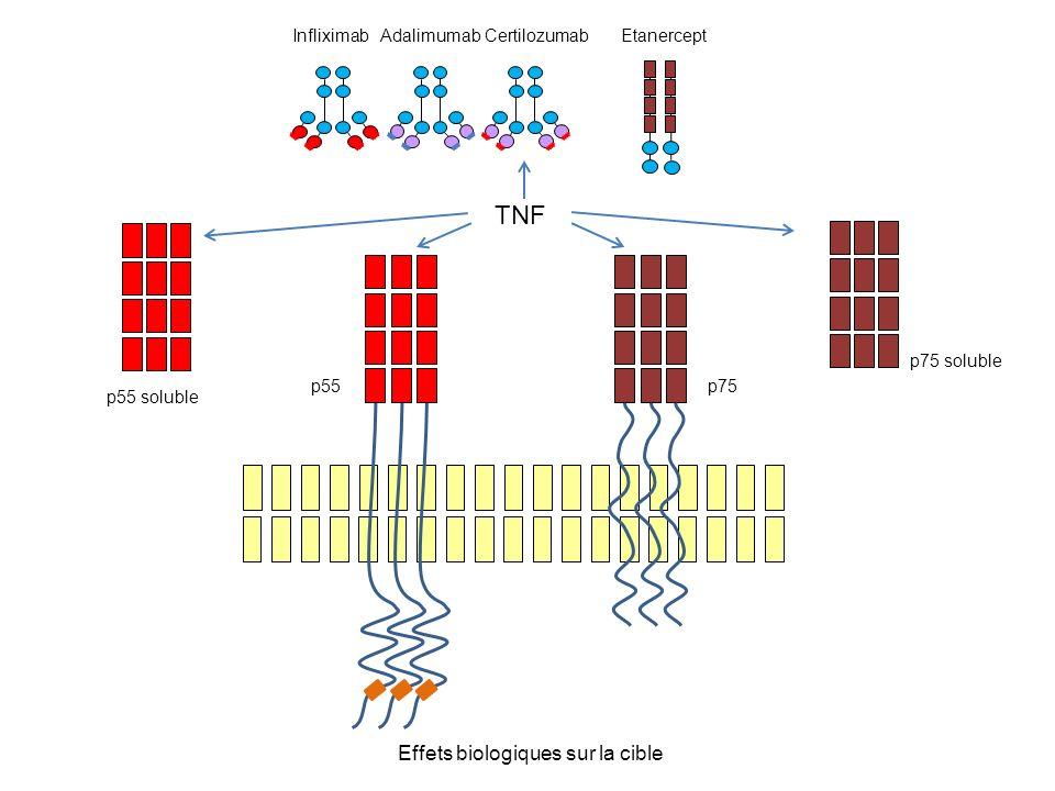 TNF Effets biologiques sur la cible p55 p75 p55 soluble p75 soluble