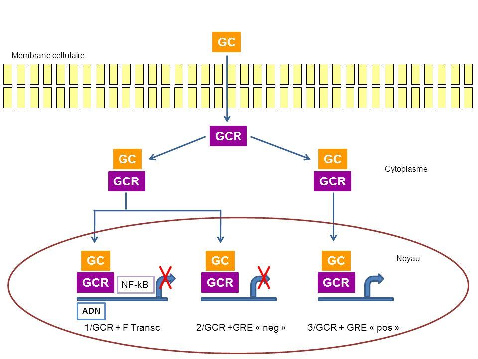 GC GCR NF-kB ADN 1/GCR + F Transc 2/GCR +GRE « neg »