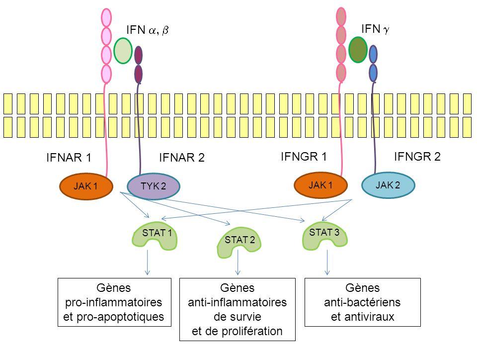 Gènes pro-inflammatoires et pro-apoptotiques anti-inflammatoires