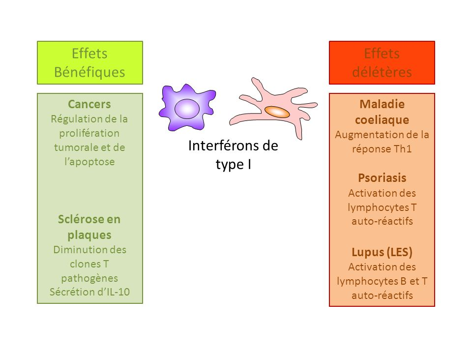 Effets délétères Bénéfiques Interférons de type I Cancers