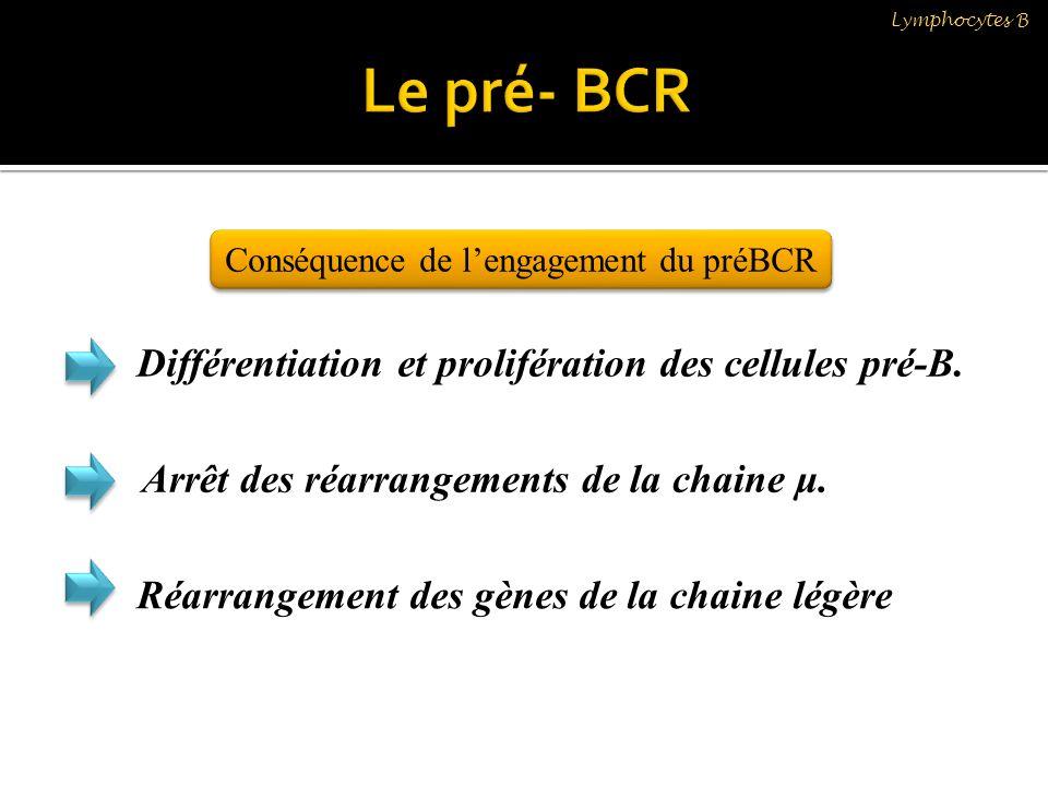 Conséquence de l'engagement du préBCR