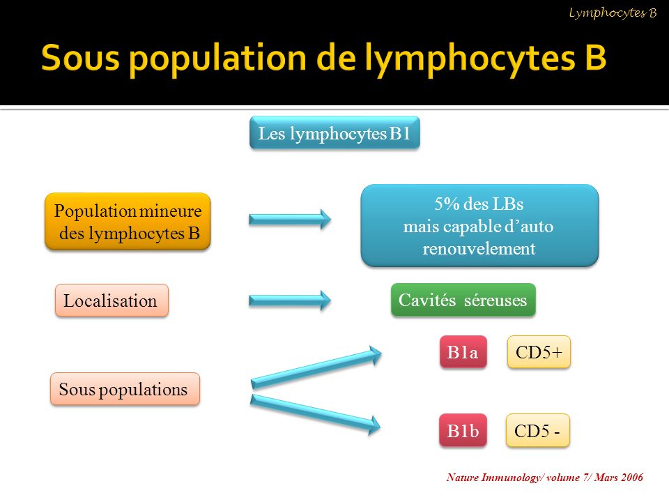 Sous population de lymphocytes B