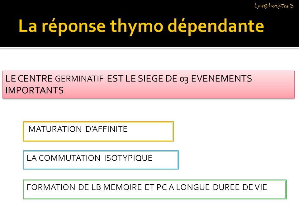 La réponse thymo dépendante