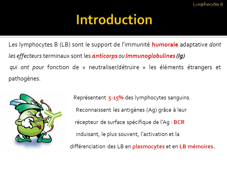 Lymphocytes B Introduction.