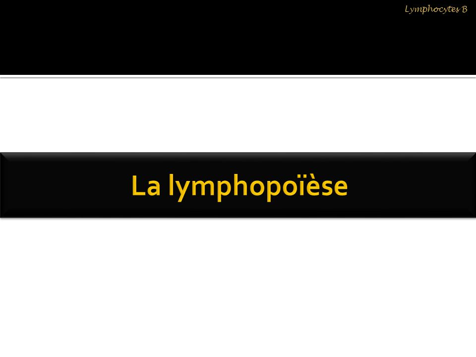 Lymphocytes B La lymphopoïèse