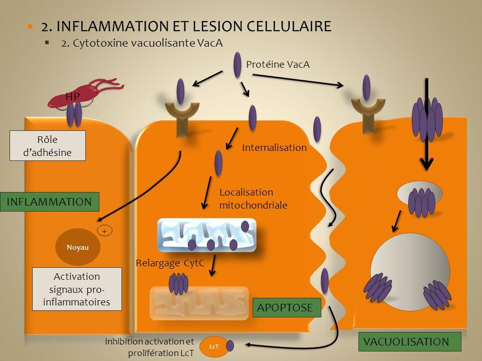 Activation signaux pro-inflammatoires
