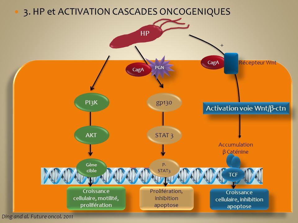 3. HP et ACTIVATION CASCADES ONCOGENIQUES