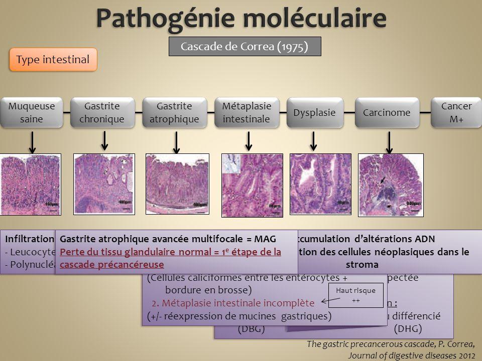 Pathogénie moléculaire