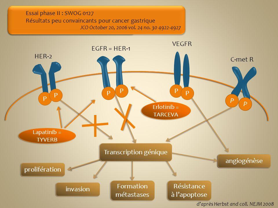 Transcription génique angiogénèse angiogénèse prolifération