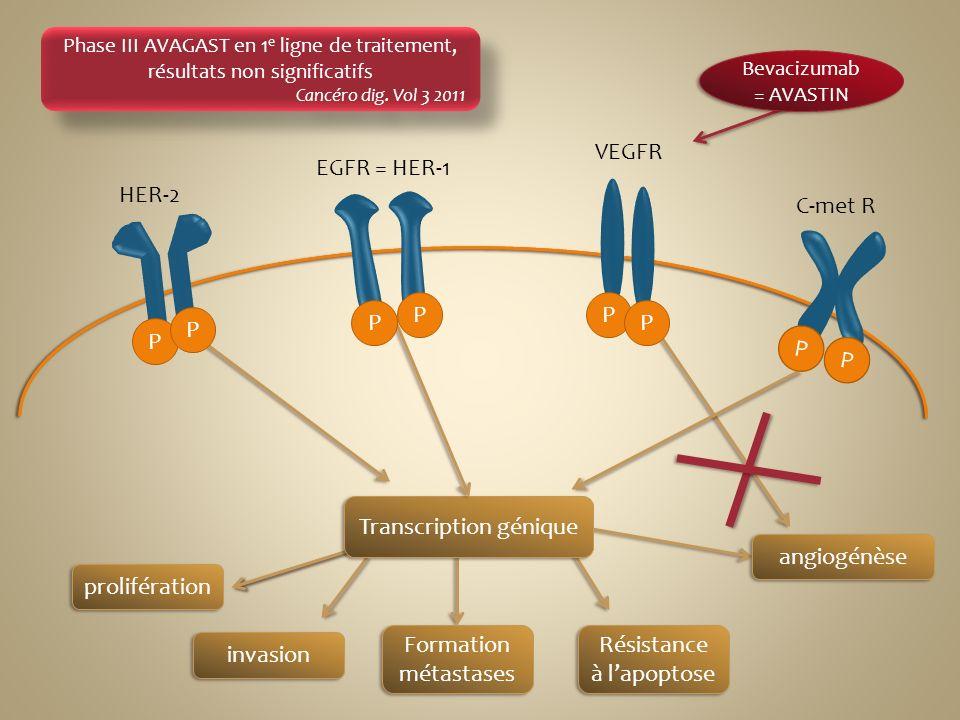 Transcription génique angiogénèse prolifération