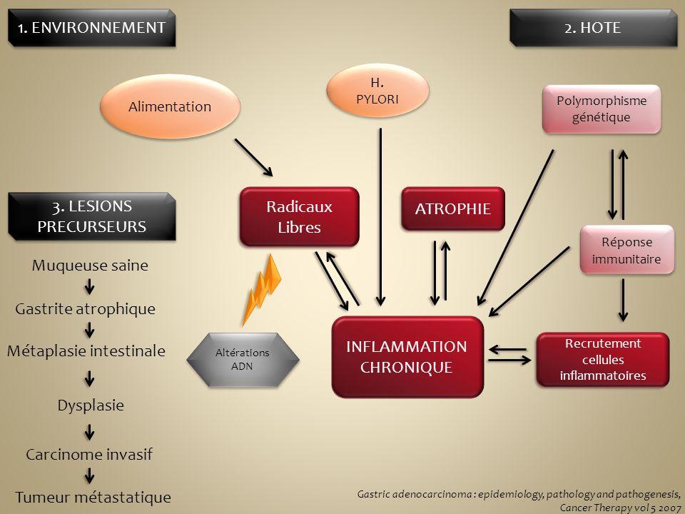 INFLAMMATION CHRONIQUE Métaplasie intestinale